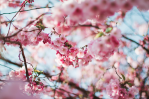 blossom words evocative spring