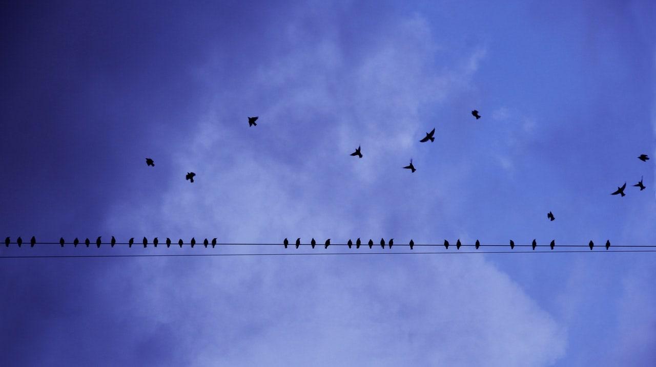 birds - language, tone of voice